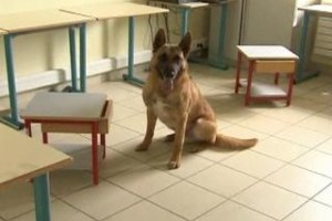 The Dog That Can Detect Cancer