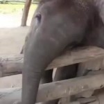 Animal Attack: Baby Elephant Tries to Wake Sleeping Dog