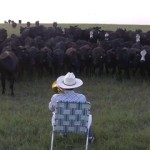 Farmer Serenades Cattle With Trumpet