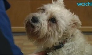 A Dog Ran Away from Home to Get to the Hospital Where Her Owner Was Receiving Cancer Treatment