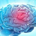 Gut Feelings: Our Second Brain